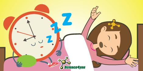 ¿Por qué nos despertamos antes de que suene el despertador?