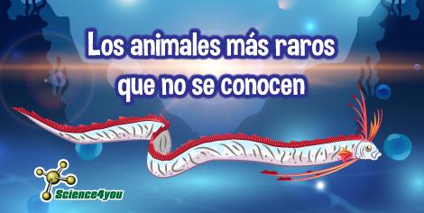Los animales más raros que no se conocen